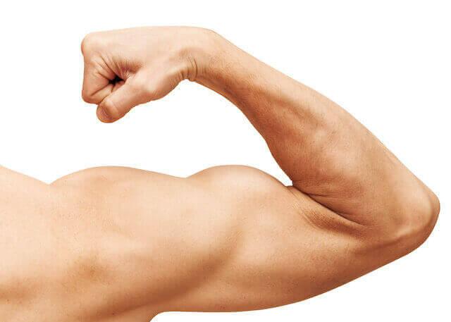 トレーニング時の筋肉